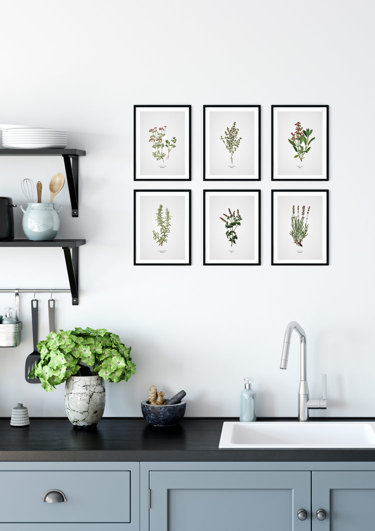Rosemary Kitchen Herb Giclee Print