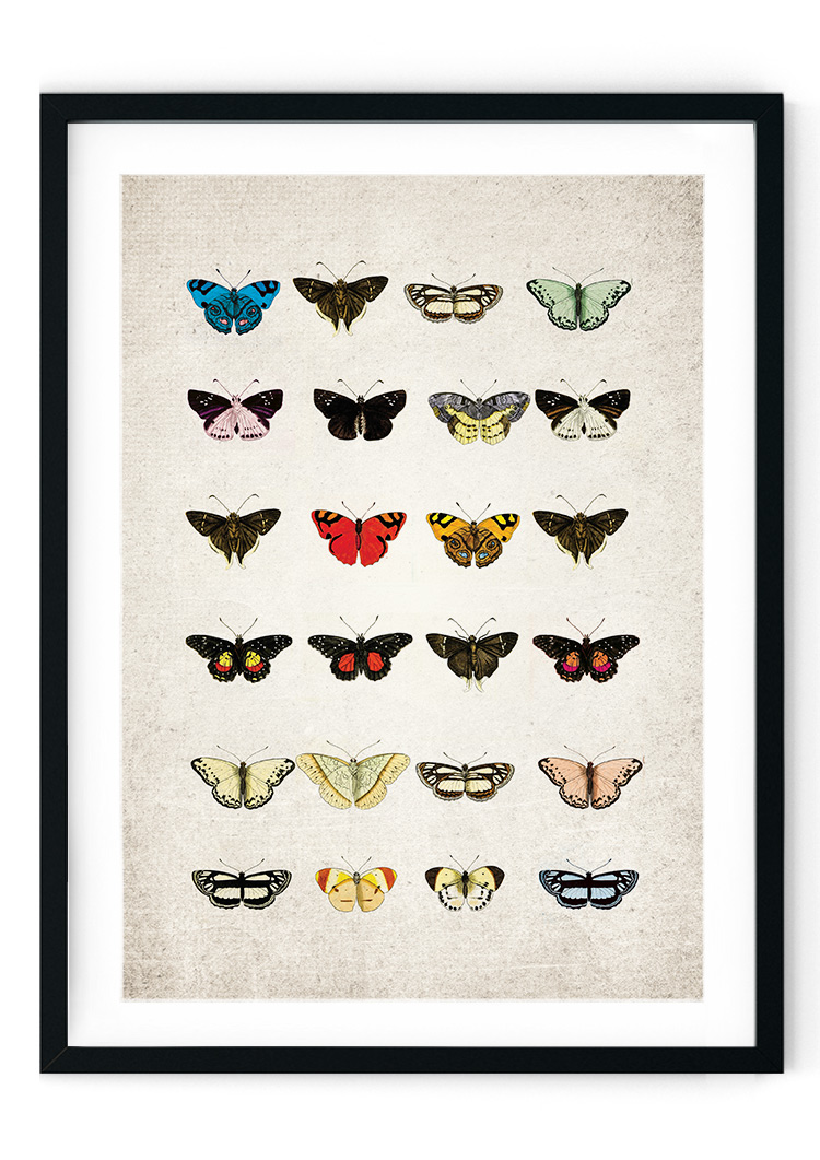 Colourful Butterfly Plate Giclee Print