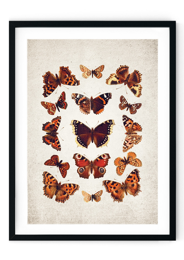 English Butterflies Giclee Print