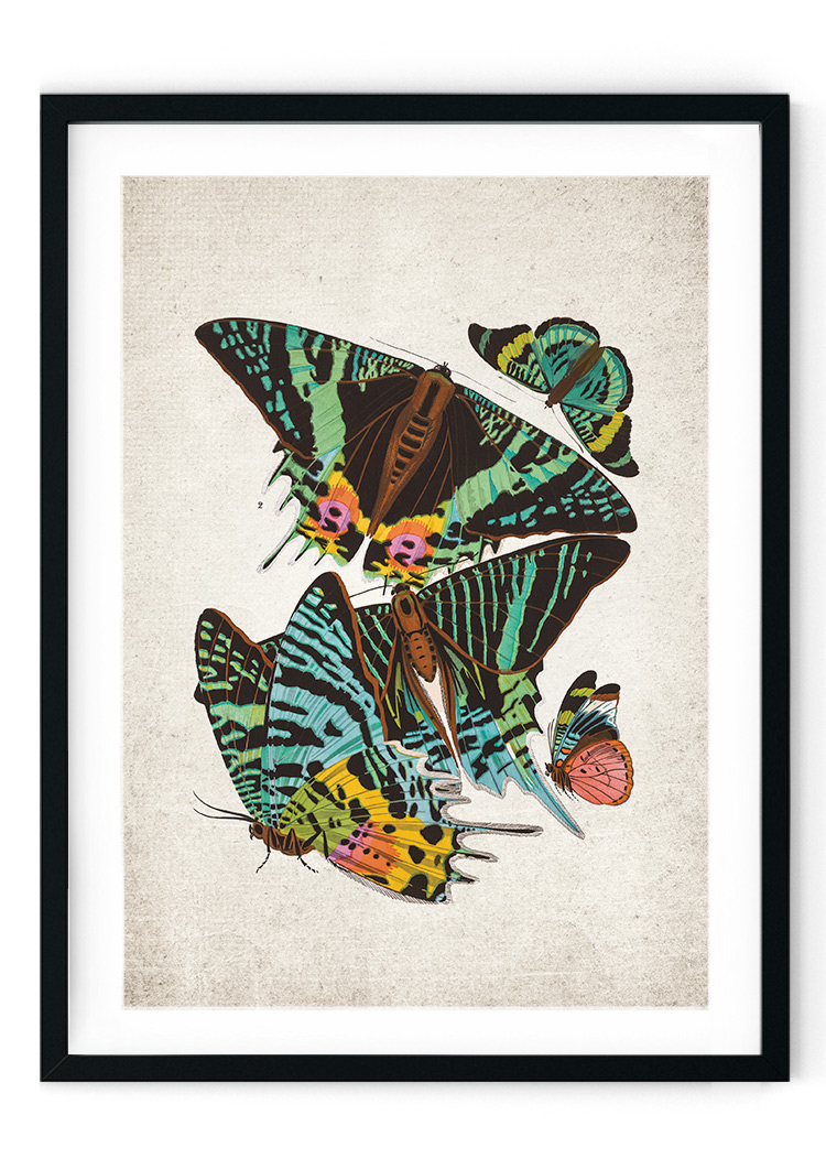 Sunset Moth Giclee Print
