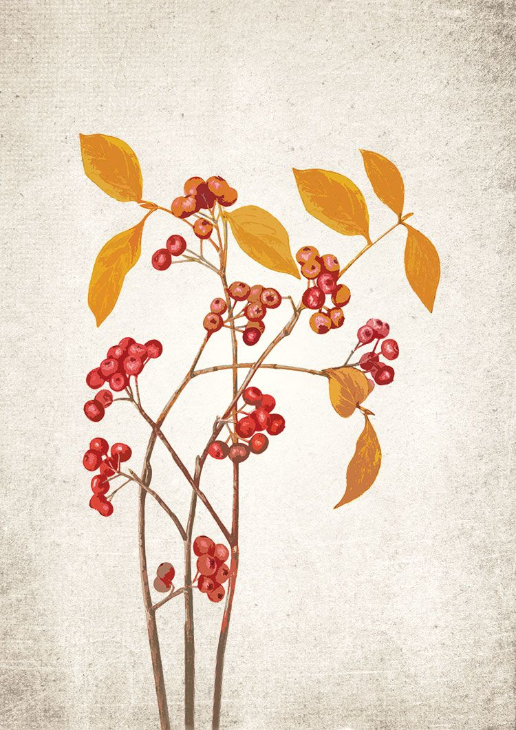 Autumn Tree with Berries Giclee Print