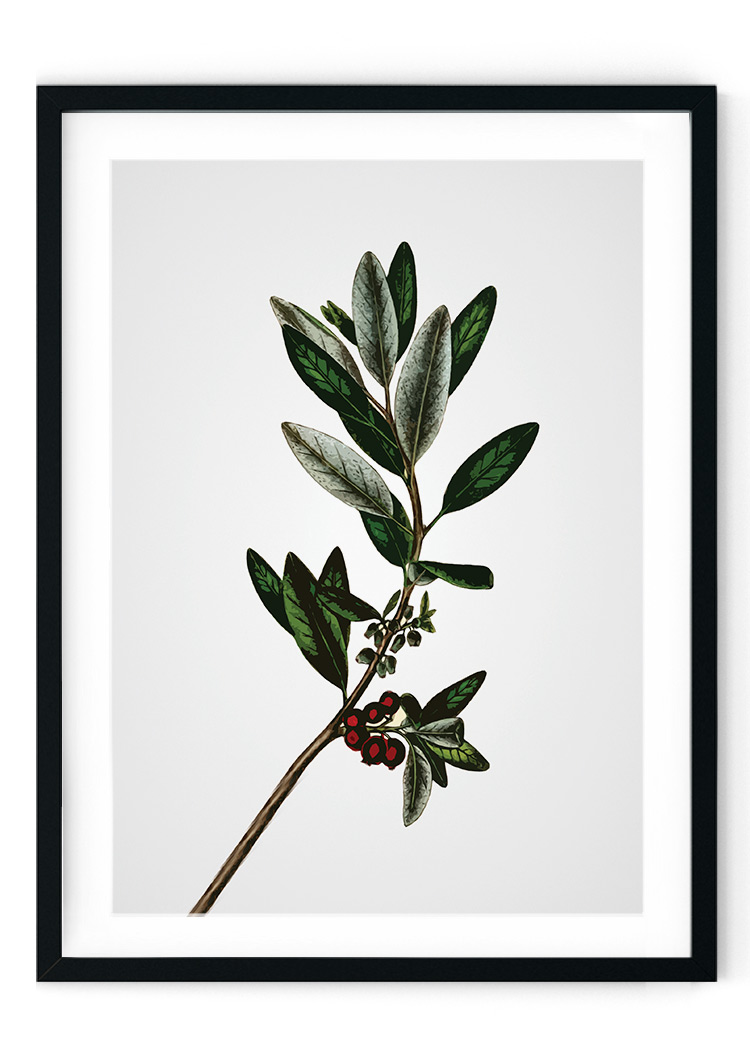 Abstract Plant Giclee Print