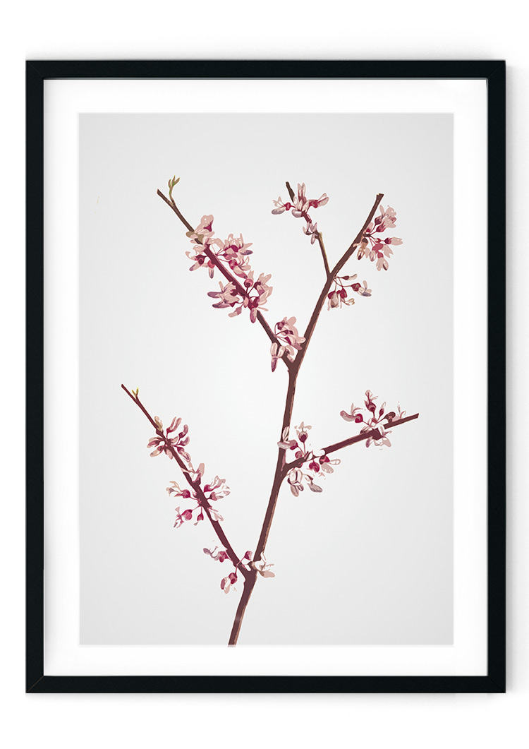 Pink Blossom Giclee Print