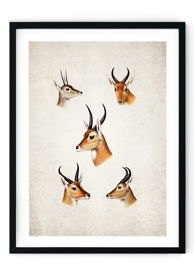 South African Game Giclee Print