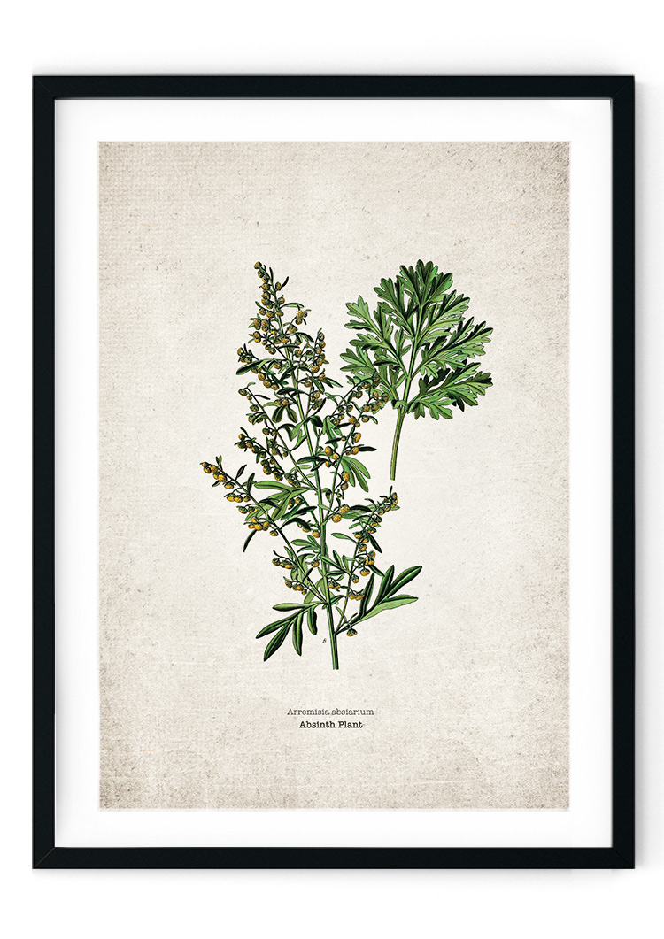 Absynth Plant Alcohol Giclee Print