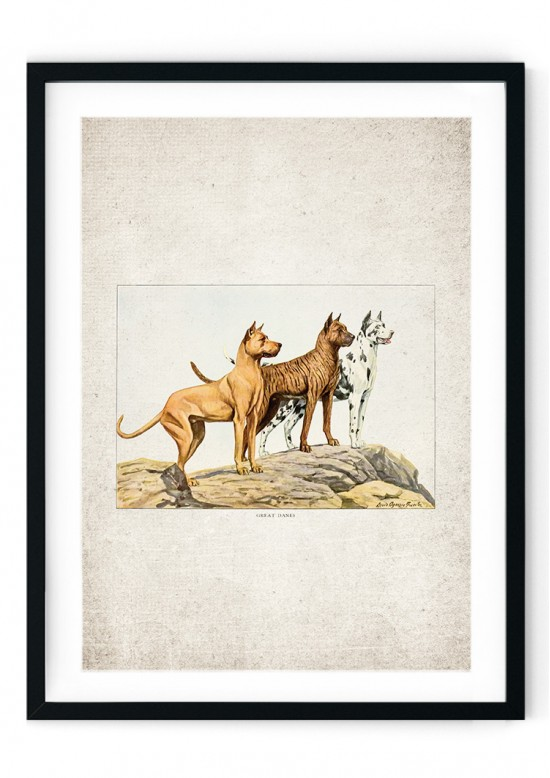 Great Dane Giclee Print