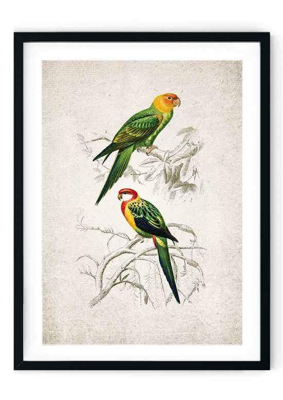 Birds of Paradise Giclee Print
