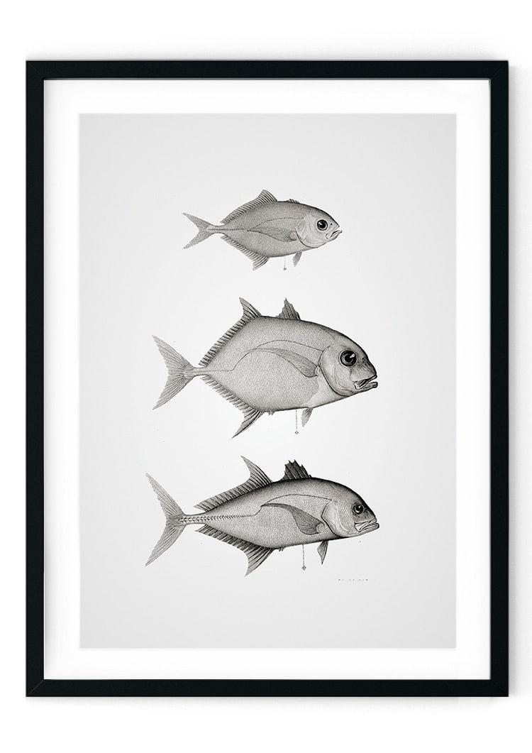 Black White Fish Giclee Print Bathroom Wall Art Amp Prints From Vintiko