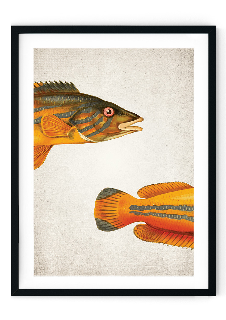 Cook Fish Giclee Print