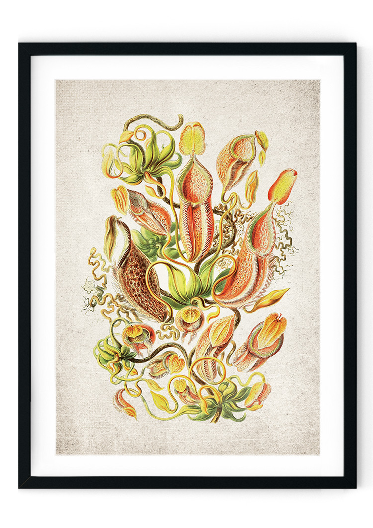Fly Trap Plant Giclee Print
