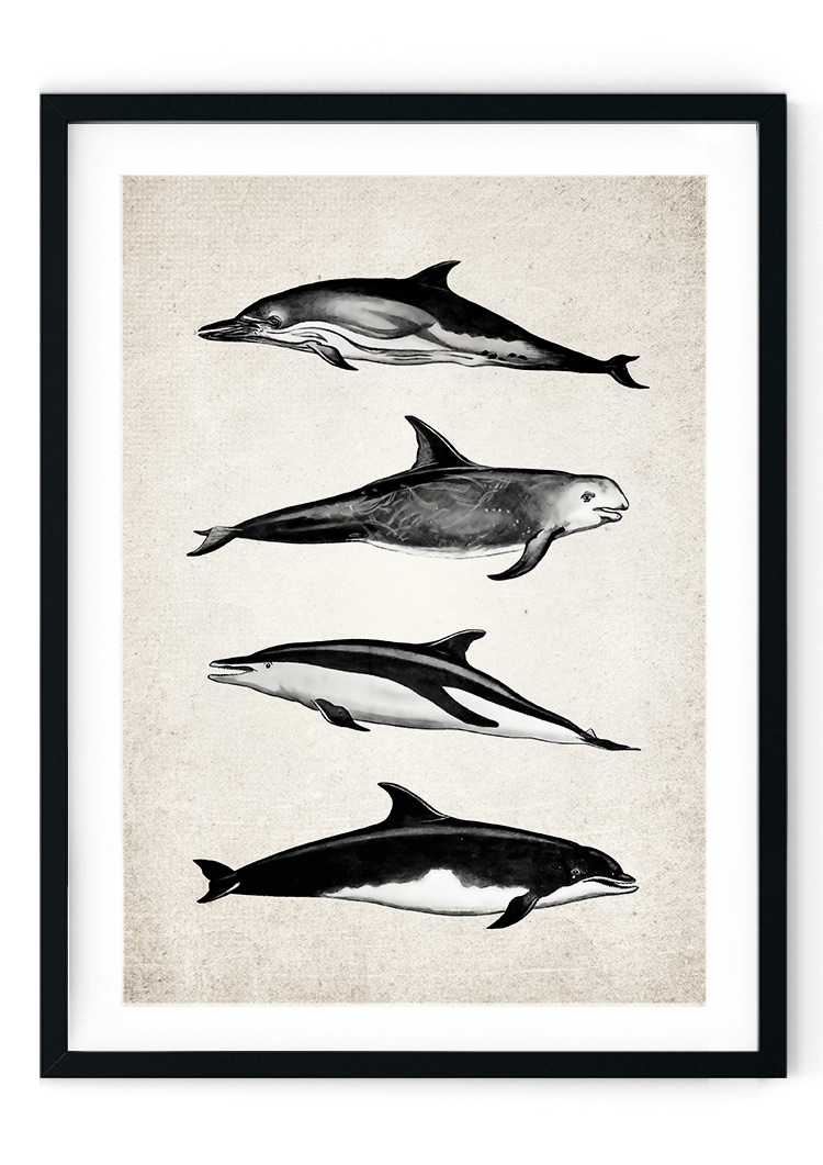 Dolphin Group Giclee Print