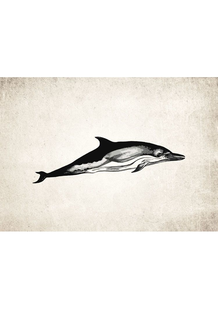 Dolphin #1 Giclee Print