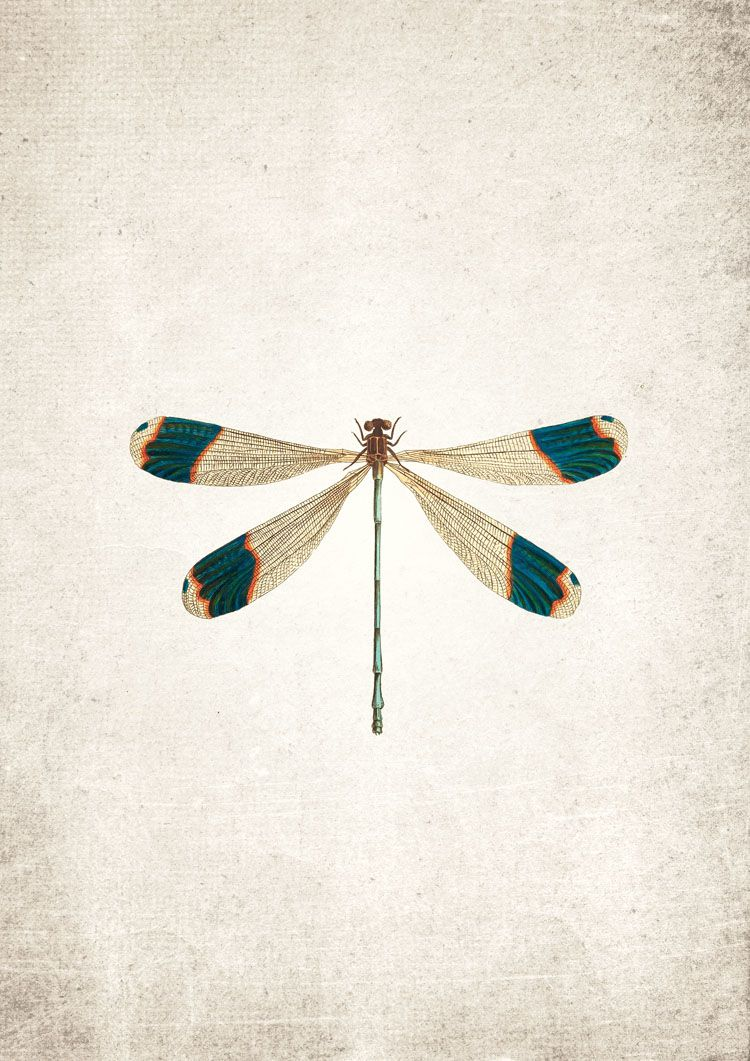 Dragon Fly Giclee Print